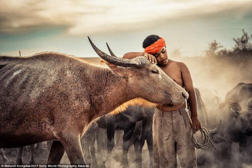 Ảnh đẹp lặng người của cuộc thi ảnh lớn nhất thế giới - 13