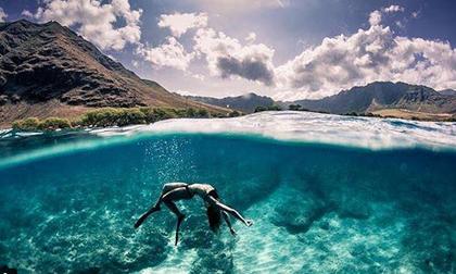 4 địa điểm du khách có thể bơi cùng cá mập