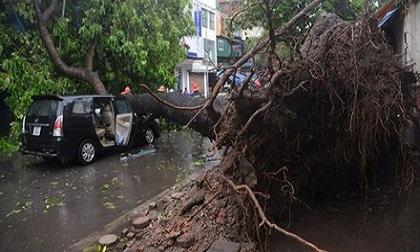 Dự báo có 13 - 15 cơn bão trong năm 2017