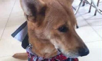 Bức ảnh cuối cùng của chú chó hy sinh tính mạng để cứu chủ