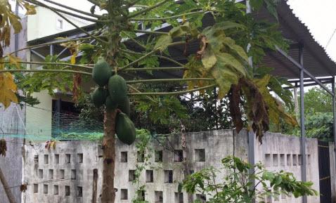 Vụ cướp ngân hàng ở Trà Vinh: Hàng xóm của nghi phạm nói gì? - 3