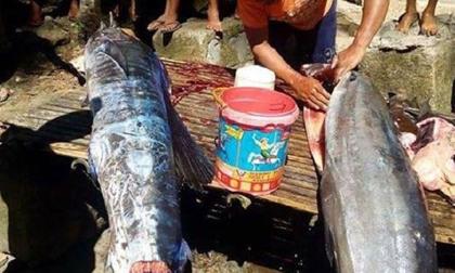 Bắt được con cá lớn, ngư dân sửng sốt khi nhìn thấy những hoa văn bí ẩn trên mình cá