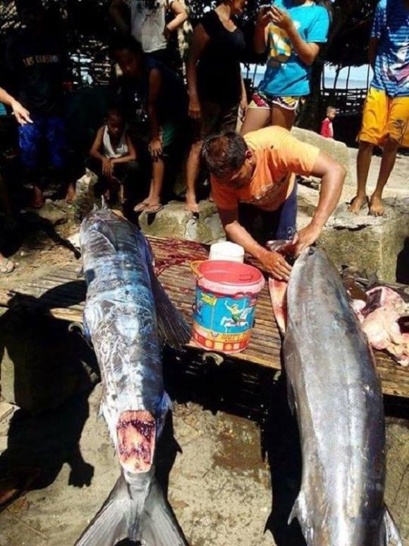 Bắt được con cá lớn, ngư dân sửng sốt khi nhìn thấy những hoa văn bí ẩn trên mình cá - Ảnh 3.