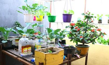 Các loại cây dễ trồng dù nhà chật đến đâu cũng trồng được trong nhà