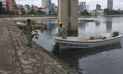 Cá chết ở hồ Hoàng Cầu có thể do sốc nhiệt
