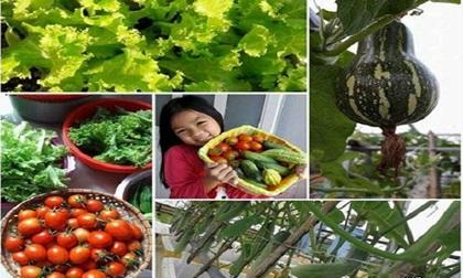 """Từng không biết gì về trồng rau sạch, mẹ Việt giờ đã sở hữu vườn rau sạch đẹp như """"công viên mini"""""""