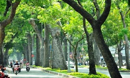 """Ngắm hàng cây trăm tuổi đẹp nhất Sài Gòn trước giờ """"khai tử"""""""