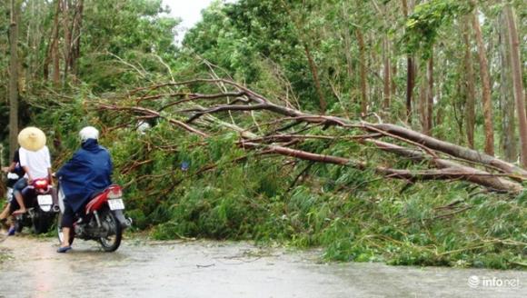 Ảnh: Hà Tĩnh, Nghệ An, Thanh Hóa tan hoang sau bão số 2 - 15