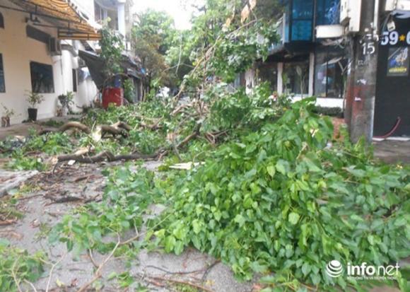 Ảnh: Hà Tĩnh, Nghệ An, Thanh Hóa tan hoang sau bão số 2 - 16