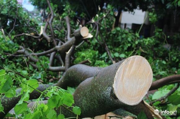 Ảnh: Hà Tĩnh, Nghệ An, Thanh Hóa tan hoang sau bão số 2 - 2