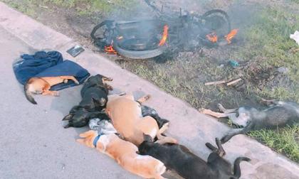 Hai đối tượng trộm chó bị người dân đánh bất tỉnh, đốt cháy xe máy