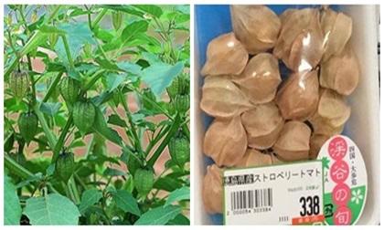 Ngỡ ngàng quả dại mọc đầy ở Việt Nam, sang nước ngoài bán giá 700.000/kg