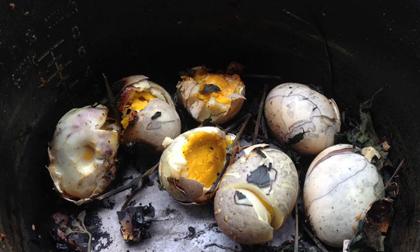 Định luộc trứng thảo dược nhuộm màu cúng rằm, cuối cùng thiếu nữ đãi cả nhà 'trứng om thuốc súng' đen thui
