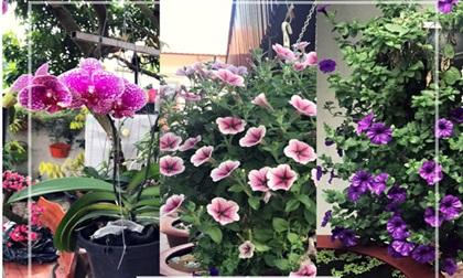Khu vườn 200 giỏ hoa rực rỡ của mẹ Hải Dương khiến khách đến chỉ muốn 'ở mãi không về'