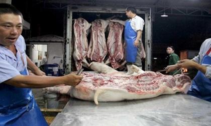 Khủng hoảng thịt lợn có thể sẽ trở lại