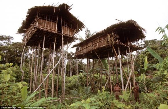 Sức sống phi thường của bộ lạc sống trong những ngôi nhà trên cây cao tới 50m, tách biệt với loài người - Ảnh 1.
