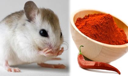 Đây chính là mẹo hay và hữu ích nhất để nhà không bao giờ có con chuột nào mà không cần thuốc diệt