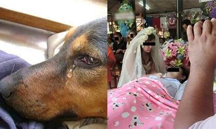 Chú rể qua đời trước ngày cưới, chó cưng cứ chảy nước mắt rồi mất tích, bất ngờ hôm sau...