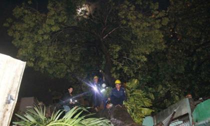 Cây cổ thụ đè sập 4 căn nhà ở Sài Gòn sau trận mưa lớn, 2 mẹ con bị thương