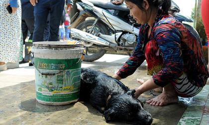 Ám ảnh cảnh người ói ra máu, vật nuôi chết sạch khi rò rỉ khí amoniac
