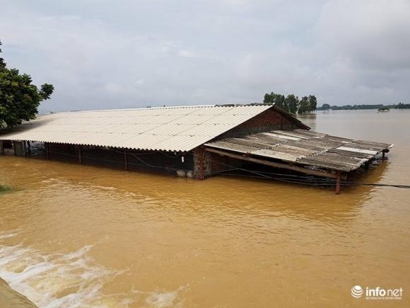 Hà Nội: Vỡ đê sông Bùi 2, hàng trăm nhà dân chìm trong biển nước - 1