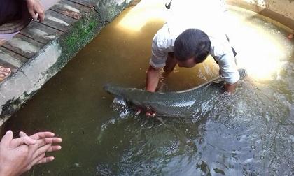 Hoảng hốt phát hiện cá sấu bơi vào nhà trong mưa lụt