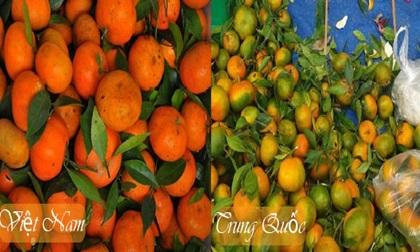 Biết mẹo này chỉ cần nhìn là đã phân biệt được cam Trung Quốc và cam Việt Nam