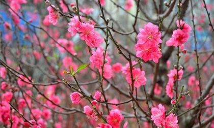 Những loại hoa nhất định phải có trong nhà ngày tết để giữ và chiêu tài lộc trong năm mới