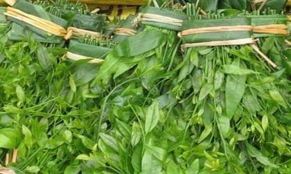 Loại rau được ví đắt ngang tôm hùm có công dụng như thế nào?