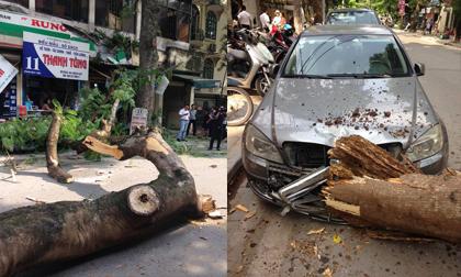 Nữ tài xế vừa bước ra khỏi xe chưa đầy 10 giây, chiếc Mercedes đã bị cây lớn đè bẹp đầu