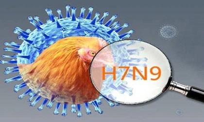 Cảnh báo dịch cúm A/H7N9 mùa thứ 6 động lực cao có thể xẩy ra