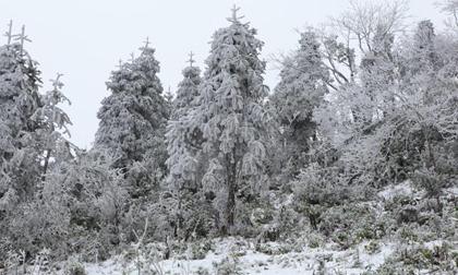 Tin không khí lạnh mới nhất: Đón rét đậm nhất từ đầu đông, đêm mai Hà Nội dưới 8 độ