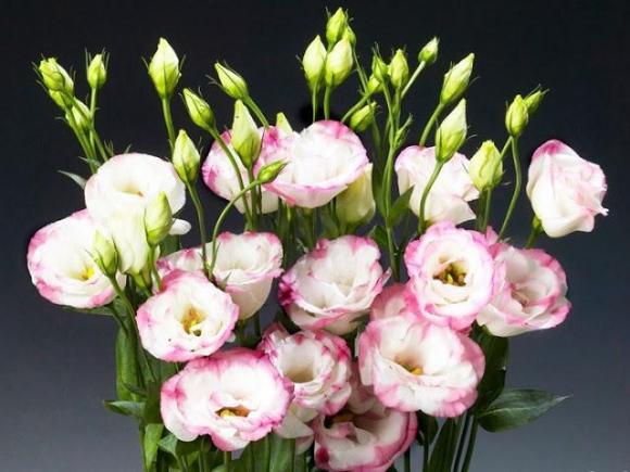 trong hoa cat tuong vua dep vua phu quy ngay tu bay gio de choi tet - 1