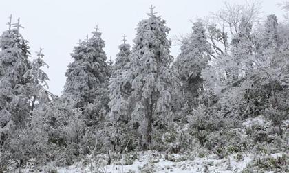Miền Bắc đón đợt rét đậm kéo dài 7 ngày và có băng giá, Hà Nội mưa rét 10 độ