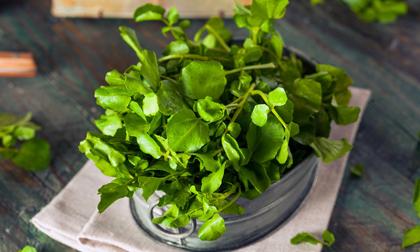 Vô vàn lợi ích từ loại rau này được chuyên gia Đông y nhấn mạnh và khuyên đừng bỏ qua vào mùa đông này