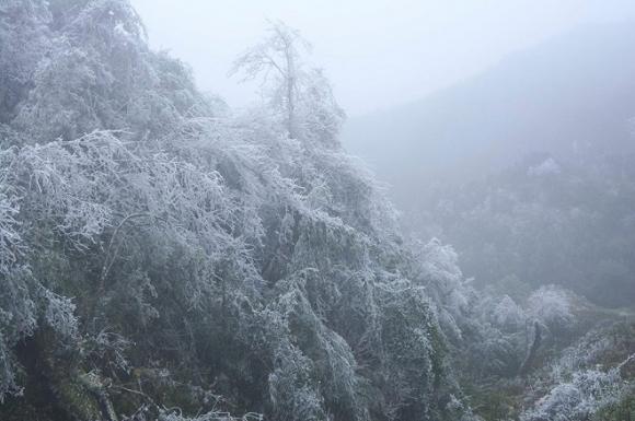 Rét khủng khiếp, cây cối hóa đá trên đỉnh Mù Cang Chải - 4