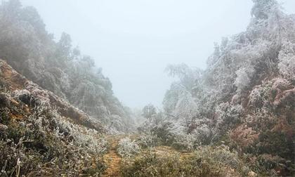 Rét khủng khiếp, cây cối hóa đá trên đỉnh Mù Cang Chải
