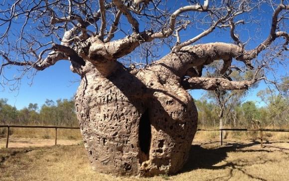 Kỳ lạ những điểm du lịch hút khách đến thăm chỉ vì… 1 cái cây - 3