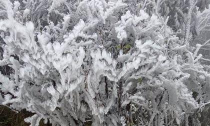 Dự báo thời tiết 31/1: Hà Nội rét 8 độ, nhiều nơi trắng băng tuyết