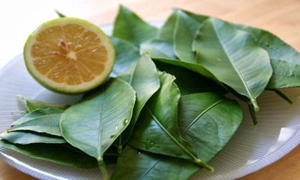 Dắt túi ngay những bài thuốc chữa bệnh từ lá chanh nếu bạn bị cảm sốt, ho do lạnh