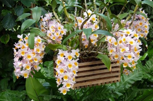 Cứ dịp Tết đến mọi người lại đi mua 10 loại hoa này để trang trí nhà cầu may - Ảnh 9.