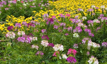 Thung lũng vạn hoa ngay tại Hà Nội - Địa chỉ