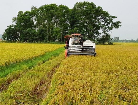 Cánh đồng thôn Đồng Tiến, xã Quảng Trường, nơi các đối tượng đòi bảo kê máy gặt lúa đánh trọng thương ông Tấn