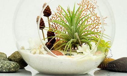 12 cung hoàng đạo nên trồng cây gì để hút tài lộc trong nhà