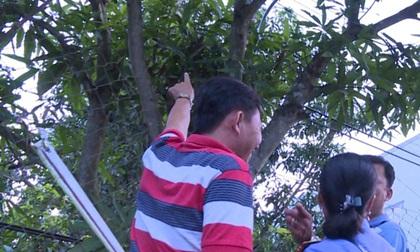 Một công nhân bị điện giật tử vong, thi thể treo lơ lửng trên cây