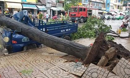 5 người bị thương trong cơn giông lốc khủng khiếp ở Sài Gòn