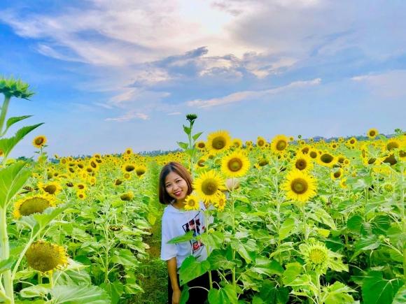 Cánh đồng hoa hướng dương ở Thái Bình hút khách những ngày đầu hè - 8