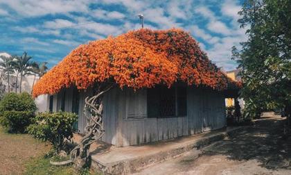 Ngất ngây với những ngôi nhà phủ đầy hoa như trong chuyện cổ tích