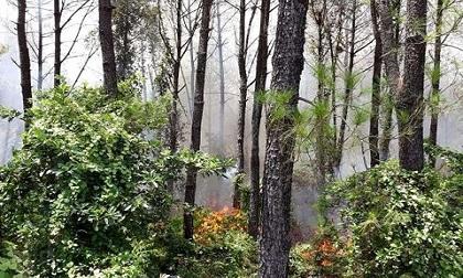 Huế: Rừng thông bất ngờ cháy dữ dội, huy động hơn 200 người dập lửa