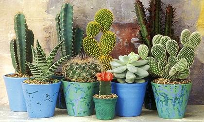 10 loại cây cảnh trồng trong nhà sẽ giúp bạn sống thọ hơn